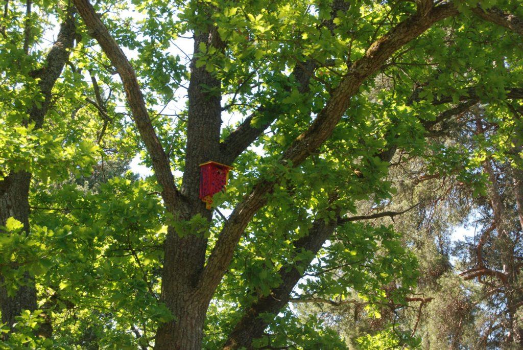 Holk i träd