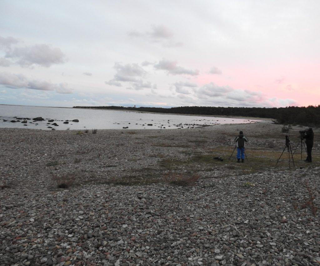 Det totala antalet fågelskådare på udden uppgick till tre stycken under hela helgen.
