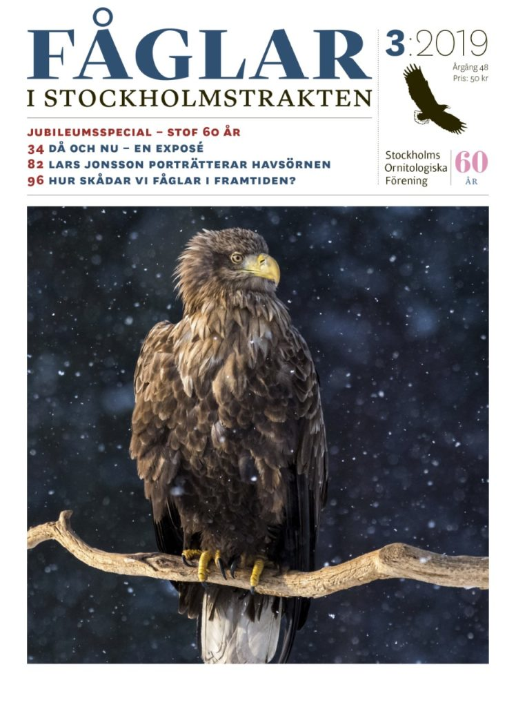 Omslag Fåglar i Stockholmstrakten nr 3 2019